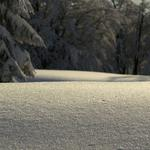Photo, winter wallpapers, tree, winters, beautiful wallpapers, trees, dynax 7d