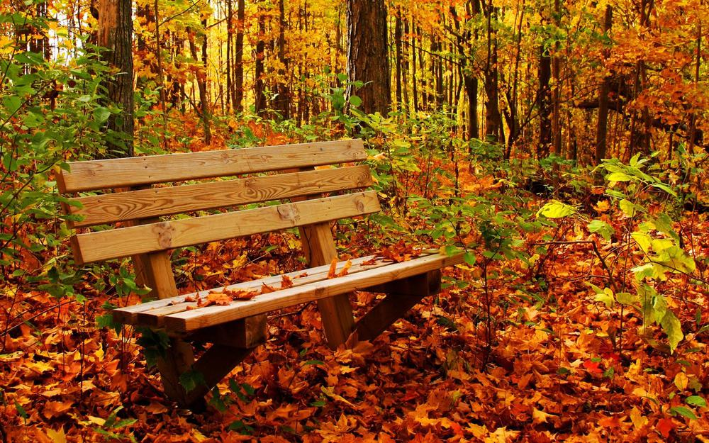 Forest, autumn, foliage, colors, bench