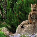 Important cat on a stone in the garden desktop background