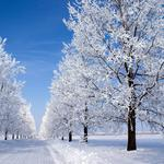Snowy morning, winter morning, woods, road, snow, blue sky, landscape desktop wallpaper