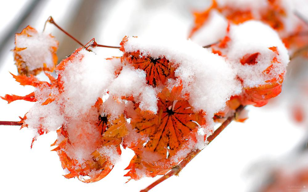 Winter, autumn, fire and snow, foliage, winter
