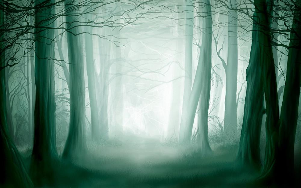 Forest, light, thicket