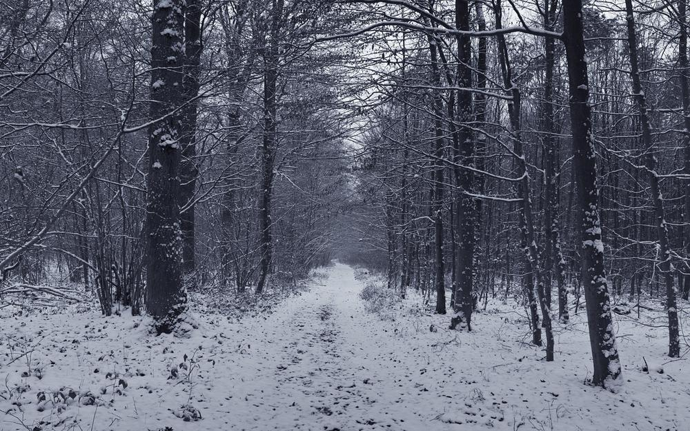 Winter, forest, snow, nature, trees
