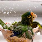 The parrot is washed in a plate wallpaper
