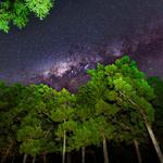 Sky, stars, night, light, trees, natural scenery picture desktop wallpaper
