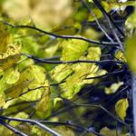 Leaves, autumn, branches, trunk, foliage, macro, tree