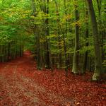 Forest, autumn, road, photo, autumn wallpapers, tree, leaves