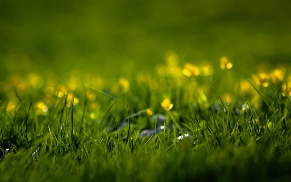 Grass, nature, flowers, blades of grass, blade of grass, summer, greenery, freshness, grass, spring