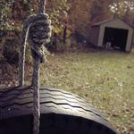 Glade, forest, rope, wheel, rope, house, focus