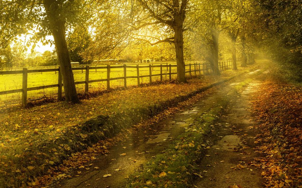 Autumn, road, nature pictures, sunny forest, leaves, autumn landscape wallpaper