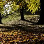 Leaves, photos, autumn, trees, falling leaves, nature, autumn wallpapers