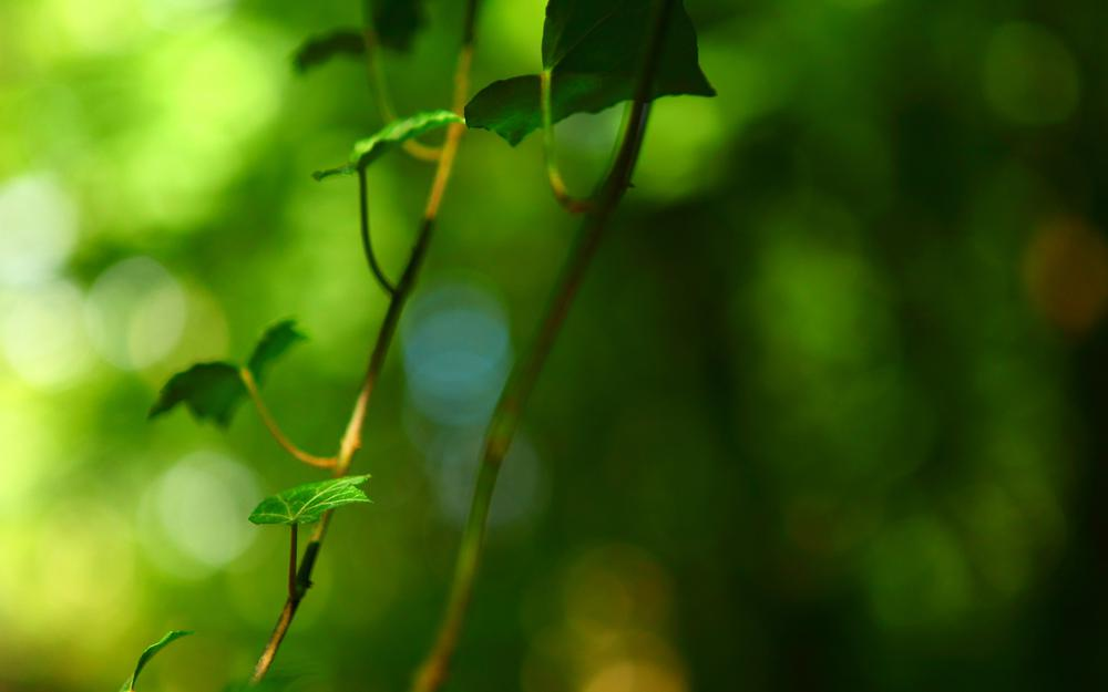 Leaves, branches, green leaves, eye protection, seductive, computer desktop wallpaper