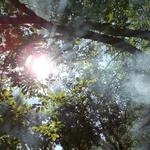 Forest, branches, trees, sun, light, rays, foliage