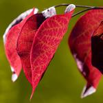 Contrast, plant, colors, veins, leaves, green, light