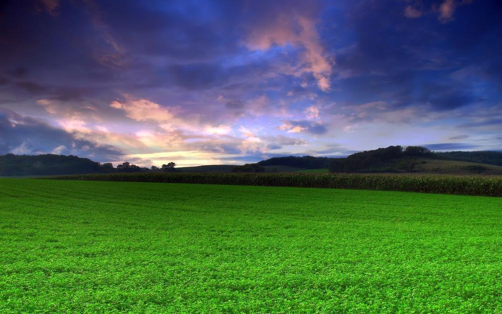 Green, grass, sky, photo, nature, landscapes, field