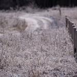 Nature, plant, fencing, frost