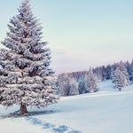 Winter, snow, nature, forest, trees, winter landscape picture wallpaper