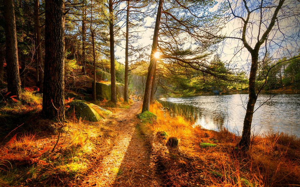 Landscape, forest, landscape, river, autumn