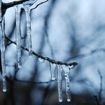 Branches, icicles, photo, evening, wallpapers, nature, trees