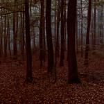Leaves, forest, trees, photo, nature, evening, tree