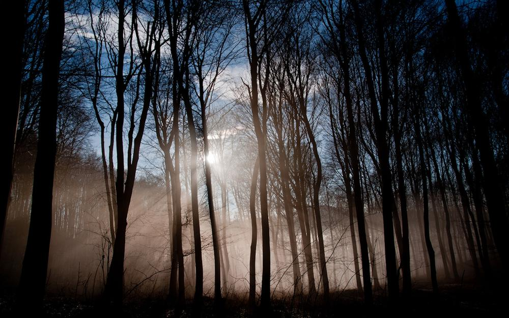 Nature, forest, rays, trees, fog