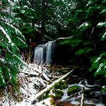 Winter, forest, snow, coniferous, waterfall