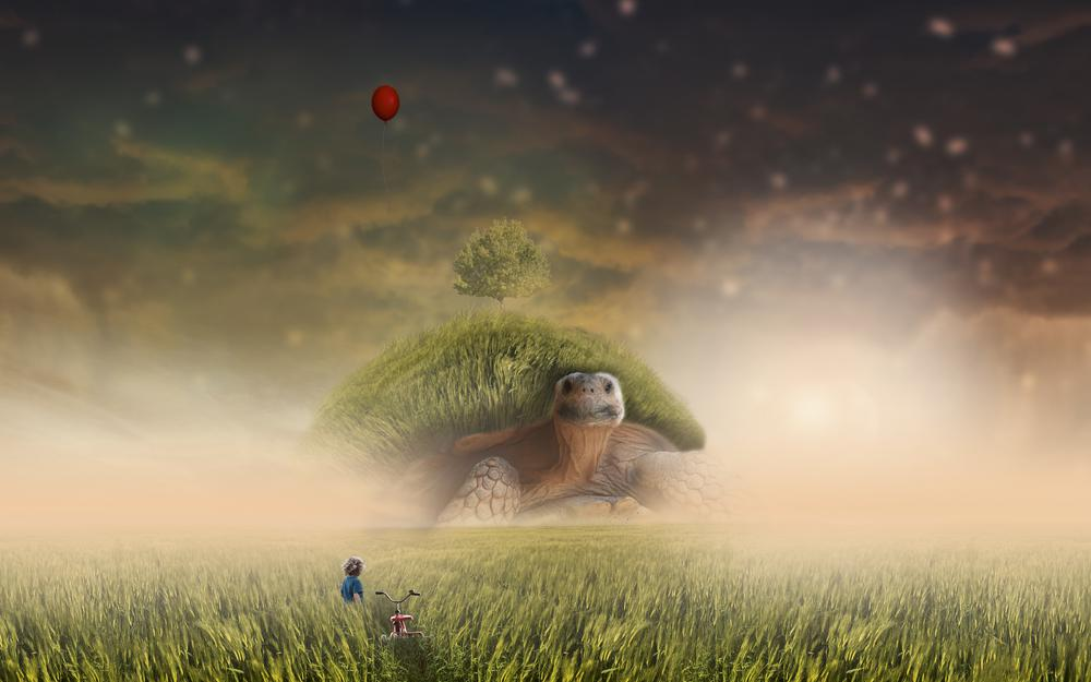 Bicycle, photoshop, child, turtle, field