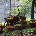 Baskets, harvest, apples