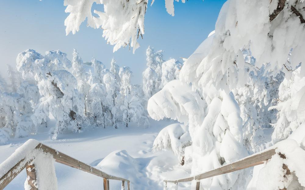 Winter, snow, snowdrifts, trees, landscape wallpaper