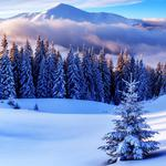 Forest sea snow field snow mountain landscape winter pictures landscape desktop wallpaper