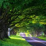 Alley, nature, road, path, trees, roads, spring, travel, summer, alleys, journey, tree, forest