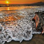 Sand, log, sunset, foam, sea