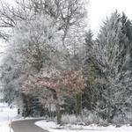 Forest, trees, road, frost, winter, snow