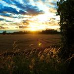 Landscape, sky, field, wheat, spikelets, sun