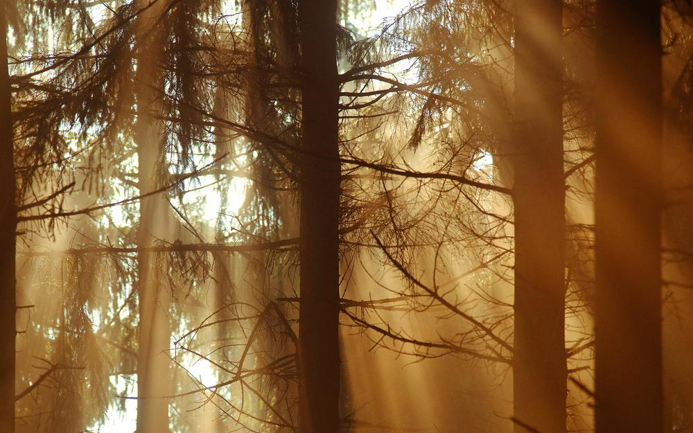 Dreamy, forest, light, rays