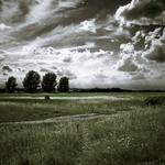 Clouds, trees, road, nature, field, sky, landscape
