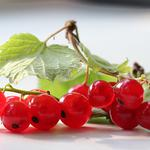 Branches, currants, leaves