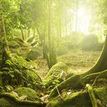 Nature scenery mysterious forest, sun, trees, stones, moss, desktop wallpaper