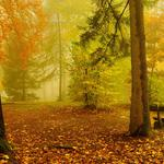 Autumn, trees, fallen leaves, chairs, forest pictures, natural scenery wallpapers