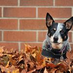 Leaves, wall, dog