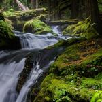 Waterfall, stream, forest, nature, trees, green plants, natural scenery wallpaper