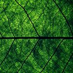 Leaf, macro, greenery, veins, nature, texture, structure
