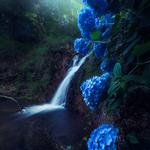 Waterfall, hydrangea, flowers, stream, water