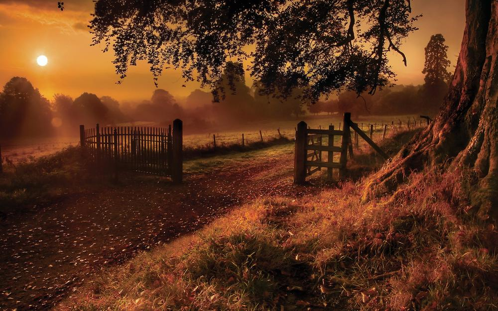 Fence, sun, tree, lawn, road, beautiful scenery desktop wallpaper
