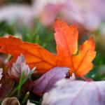 Macro, leaves, bright, blur, autumn, bokeh, colors, nature, grass