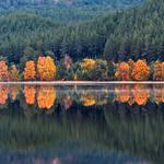 Autumn, loch morlich, trees, water, scotland, forest, mountains, lake, reflection, shore