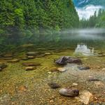 British columbia, canada, landscape, river, forest picture, desktop wallpaper