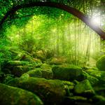 Natural forest, jungle, trees, sunlight, green moss, landscape desktop wallpaper