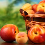 Fruit, apricots, peaches, nectarines