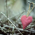 Love branches nature wallpaper